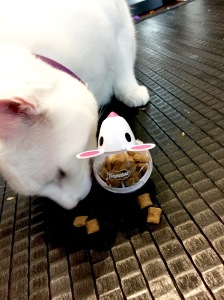 Maru with Snacky Mouse