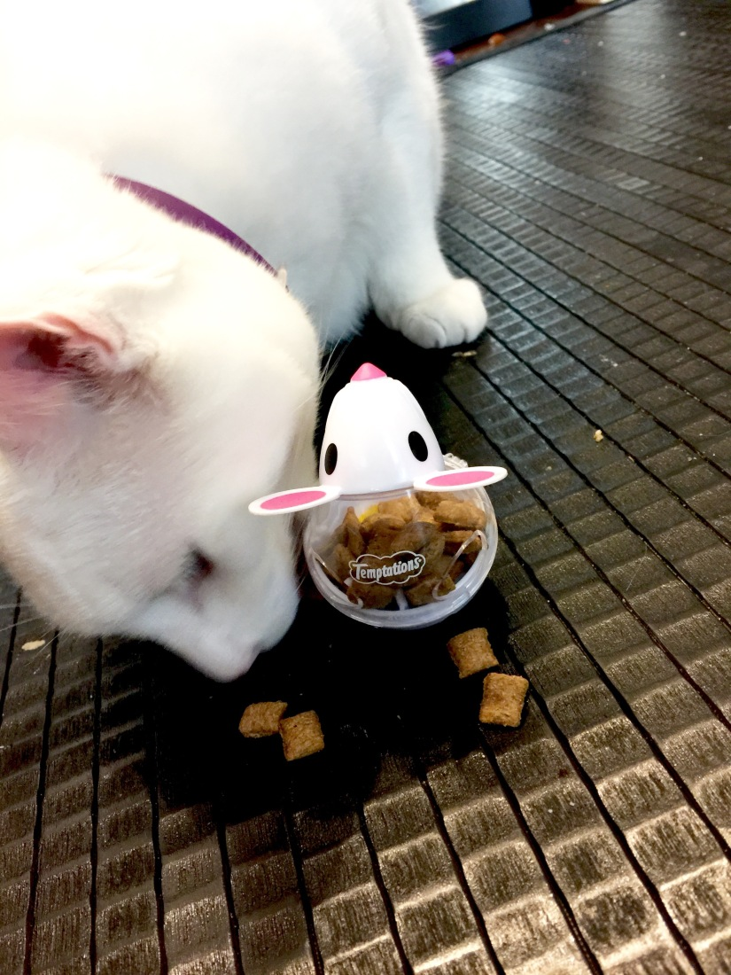 Snacky Mouse